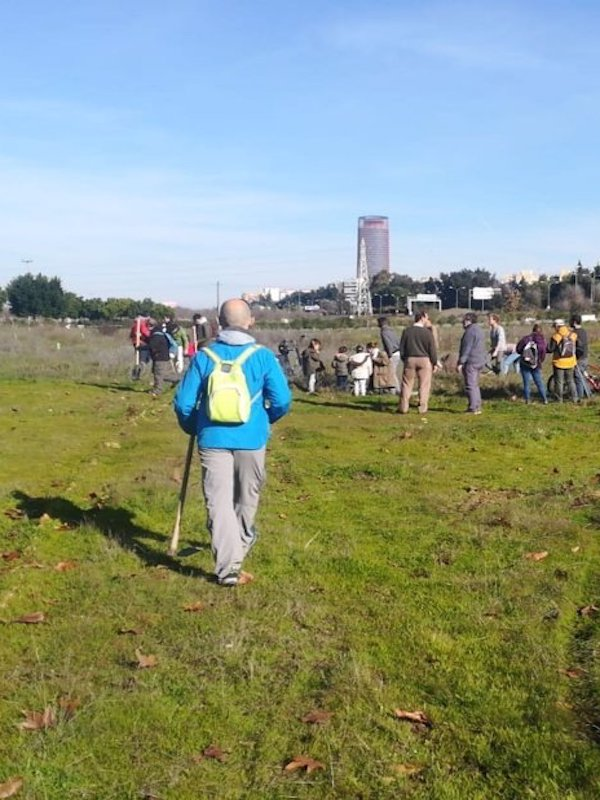 El Ayuntamiento de Sevilla planta 1.800 alcornoques
