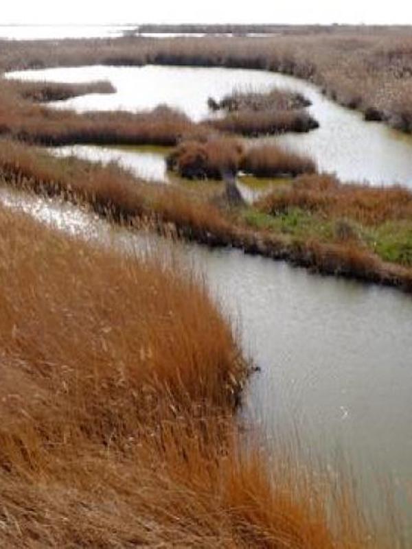 Alerta, exceso de nutrientes en el agua de Doñana