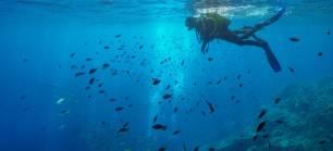 Fundación Biodiversidad. Los servicios de los ecosistemas marinos, esenciales para el bienestar y la economía