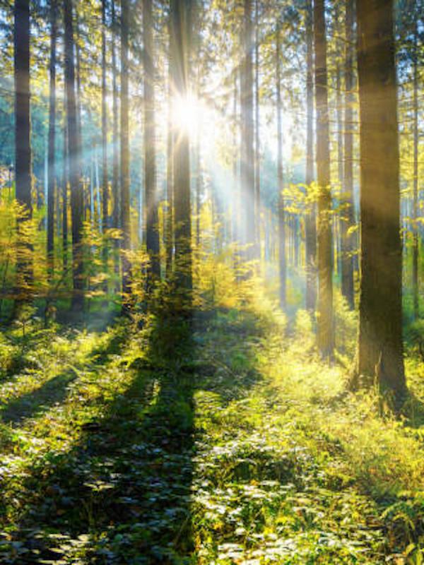 ¿Restaurar 1.000 millones de hectáreas de tierras degradadas es posible?