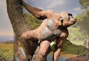 El oído interno de los primates del Mioceno esconde claves de la evolución humana