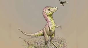 Las crías de tiranosaurio salían del huevo con el tamaño de un perro