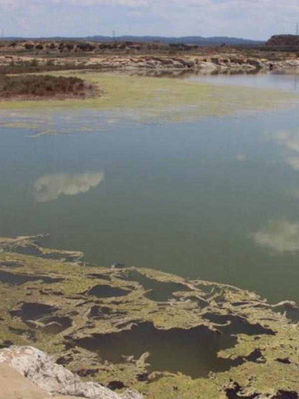 Denuncian el deterioro de las lagunas y exigen la restauración de la laguna de Cortijo Viejo (Baena)