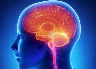 ¿Qué es y para qué sirve el 'basurero' del cerebro?