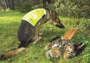 La falta de medidas para proteger a los animales salvajes del envenenamiento por cebos en España