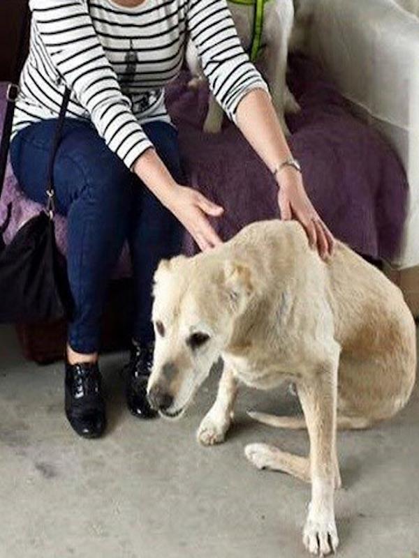 Perros y el maltrato animal 'recurrente'
