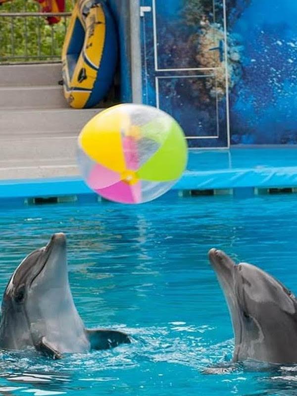 Día Mundial de los Delfines en Cautiverio 2021