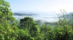 ProVeg apoya 'sin reservas' el 'Decenio de las Naciones Unidas para la Restauración de los Ecosistemas'