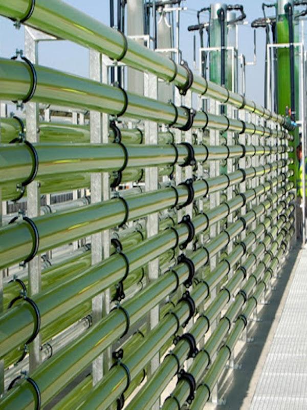 Caixa Capital Risc entra en el capital de AlgaEnergy, líder en innovación en el uso de microalgas