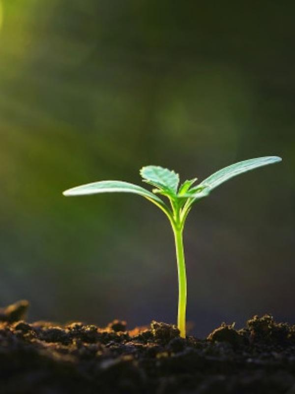 Medio Ambiente repartirá 500 millones entre las CCAA para inversiones en biodiversidad y restauración ambiental