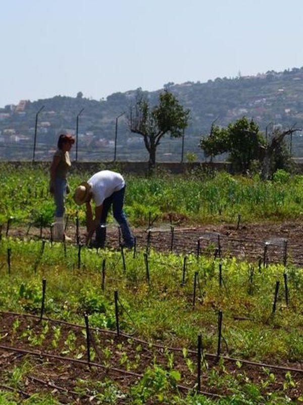 La España rural ya es ecológica