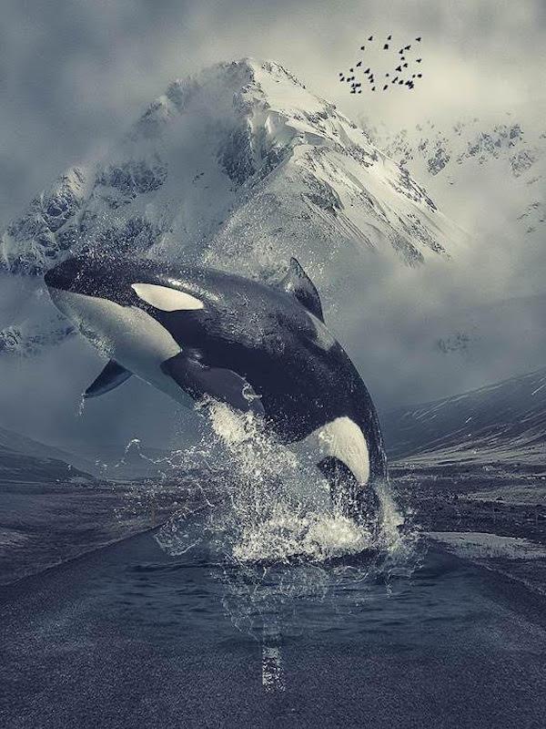 Día Mundial de la Orca 2021