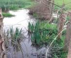 Asturias. Sancionan vertidos de purines a la ría de Villaviciosa