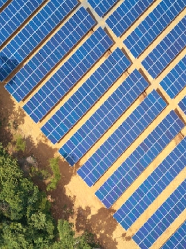 UNEF arranca el 'Certificado de Excelencia en Sostenibilidad y Biodiversidad para plantas fotovoltaicas'