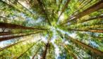 Bruselas quiere plantar 3.000 millones de árboles dentro del plan para mejorar la situación de los bosques en la UE