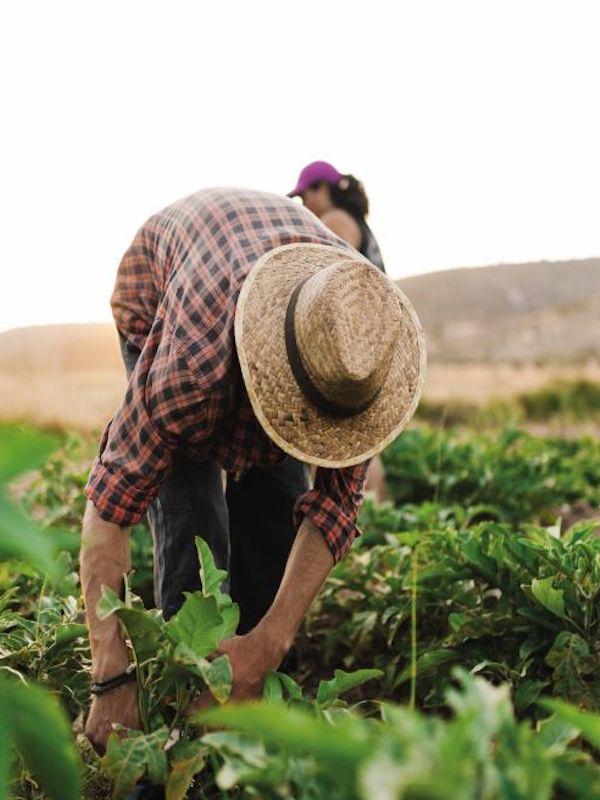 Predicción del clima y la sostenibidad del agua en la agricultura