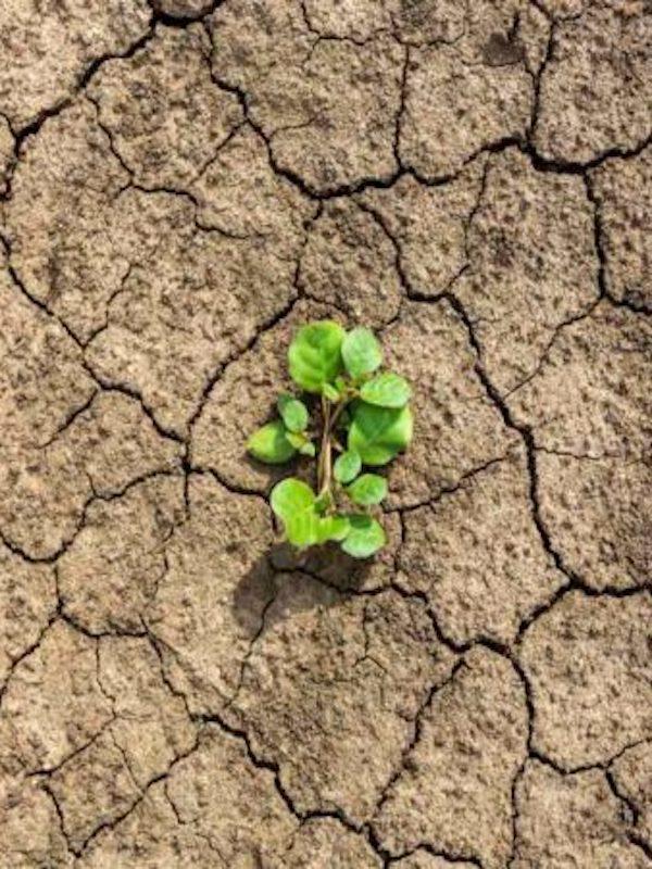 Usan la arqueología para comprender mejor el cambio climático