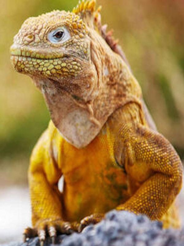 Perros, iguanas y ser humano, ¿busca las dos diferencias?