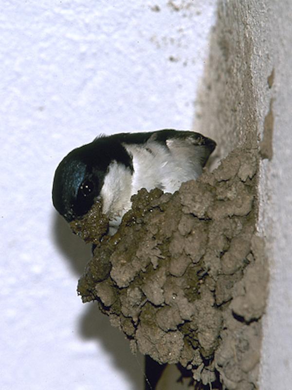 Las aves urbanas de Cáceres pueden respirar tranquilas