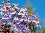 Flores en 'pie de guerra' contra el cambio climático