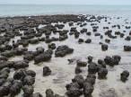 Los estromatolitos, primeros formadores de zonas arrecifales mexicanas