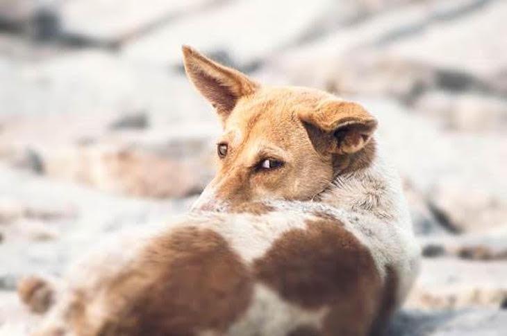 Día Mundial del Perro Callejero 2021