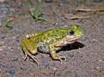 El impacto del ser humano tiene una influencia negativa sobre la diversidad de anfibios y reptiles
