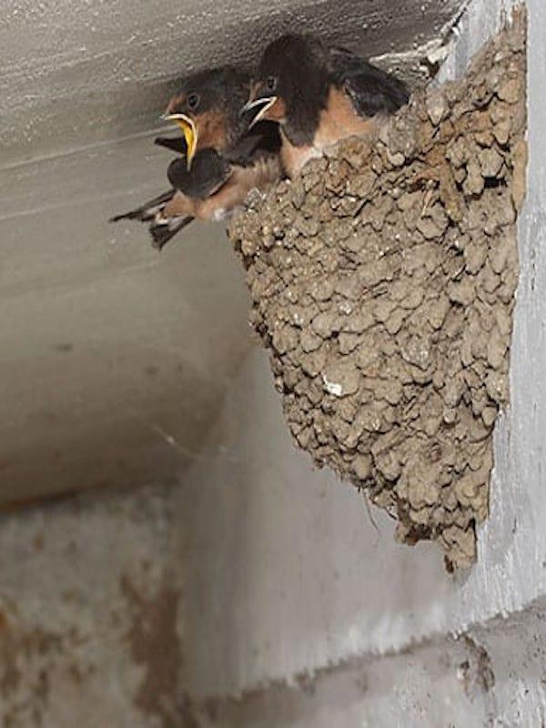 STOP a la destrucción innecesaria de nidos