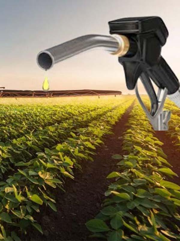 Argentina. Biocombustibles: qué son y cómo impactan en el ambiente