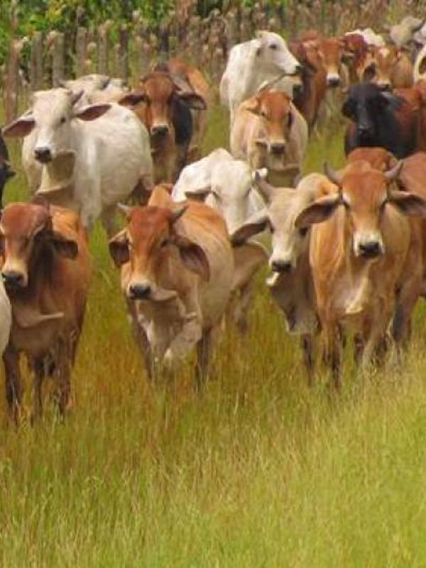 La ganadería en México tiene amplio potencial para contribuir a la mitigación y la adaptación al cambio climático