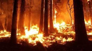 Extremadura se pone a punto para afrontar los incendios forestales