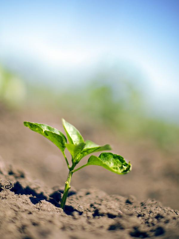 Uruguay pone énfasis en cuidado del ambiente y los recursos naturales