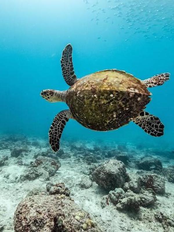Día Mundial de los Océanos 2021, todas las claves