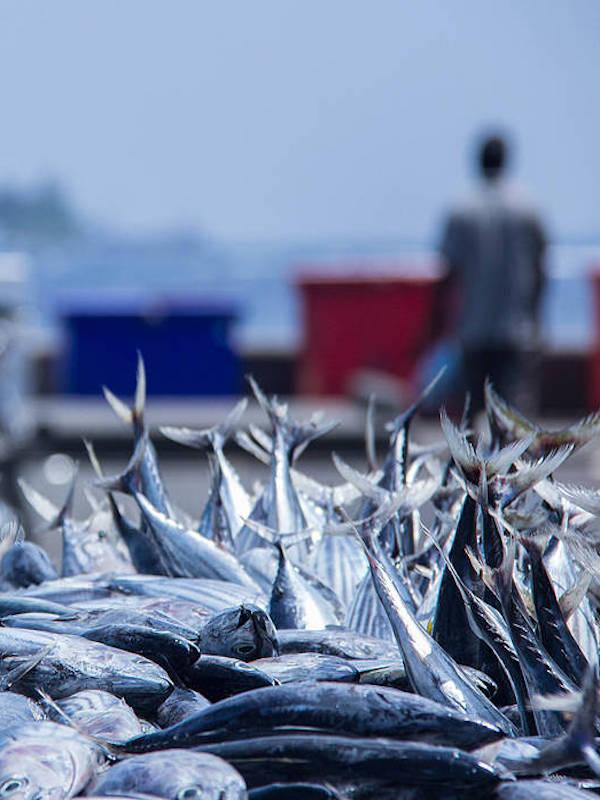 Bolton Food y WWF 'alianza' para asegurar la pesca sostenible en los océanos