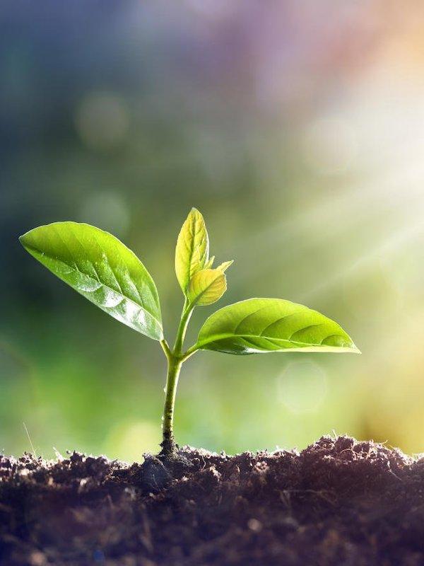 Climate Neutral Now apoyando a los Objetivos de Desarrollo Sostenible (ODS)