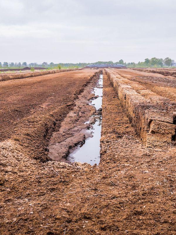 Drenaje de turberas para la agricultura: estimación de las emisiones de carbono durante el último milenio