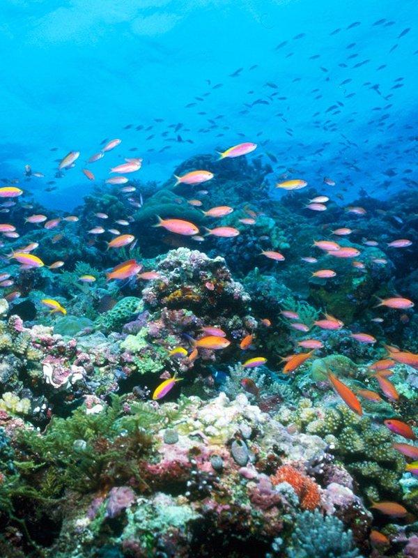 Día Mundial de los Océanos 2021, la UNESCO presenta las primeras Acciones del Decenio de los Océanos