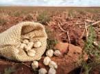 España recibe la solicitud para que el 'Plan de Recuperación' promueva sistemas alimentarios sostenibles