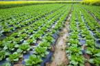 Proyecto AP-WASTE. Degradan plásticos agrícolas con el uso de insectos y lombrices