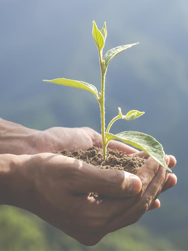 Medio Ambiente, un potentísimo motor de recuperación en todos los sectores económicos