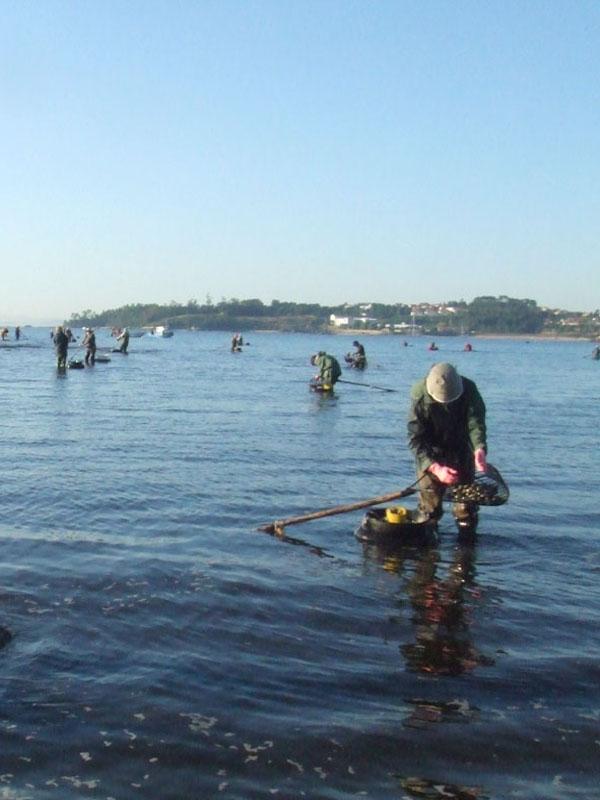 Marisqueo sostenible en las costas gallegas
