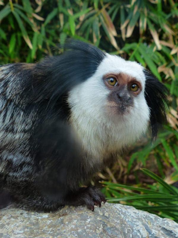 Especies endémica, todo lo que deberías saber