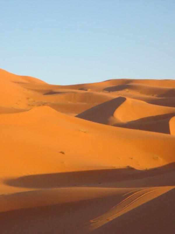 Animales del desierto, los grandes desconocidos