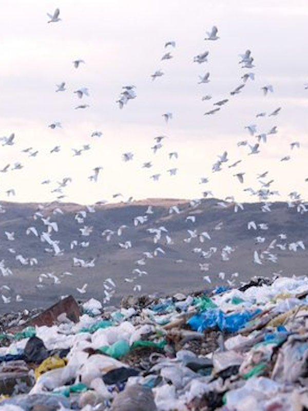 La distribución de un solo uso orquestado por la industria del plástico llena nuestras casas de residuos