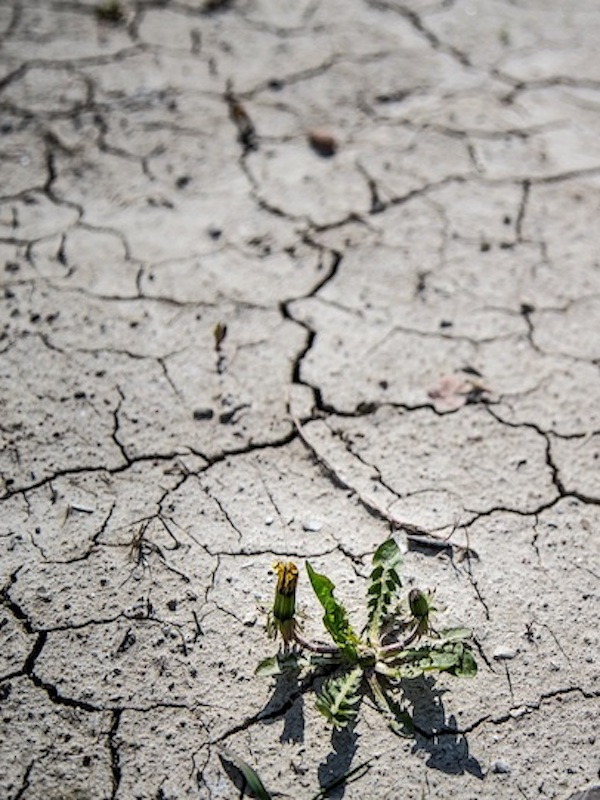Pasito a pasito: 'Acción climática empresarial'
