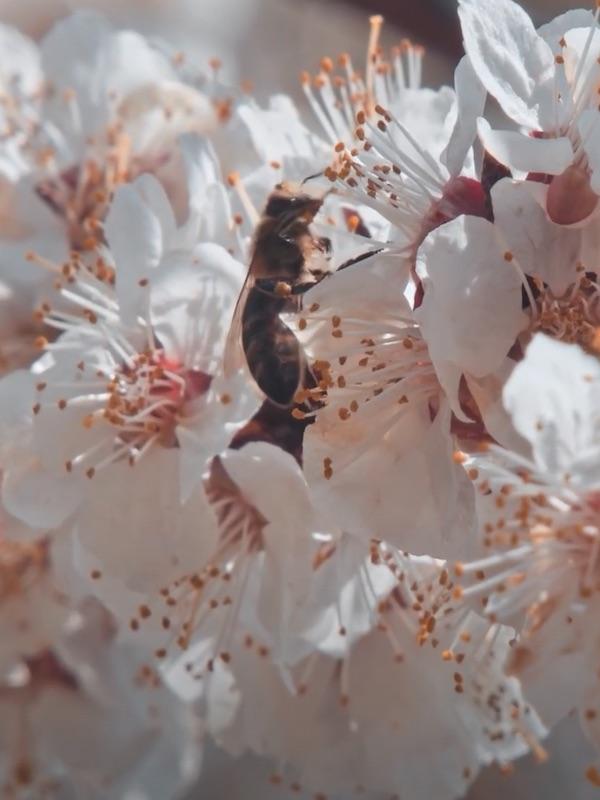 La enorme importancia de las abejas en la agricultura
