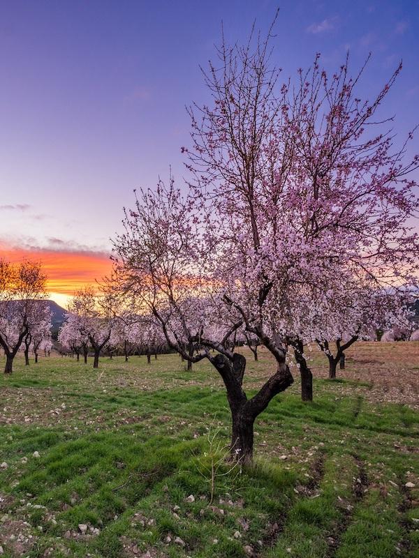 Fundación Global Nature y su 'Observatorio de la Biodiversidad Agraria'