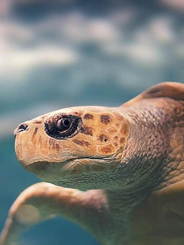 Día Mundial de las Tortugas Marinas 2021