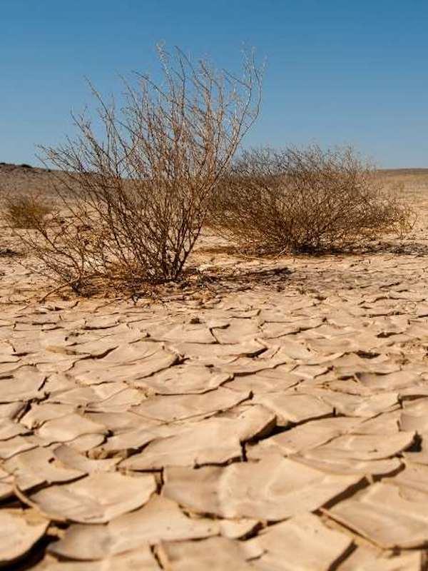 Día Mundial contra la Desertificación y la Sequía 2021, España está ya en riesgo de desertificación
