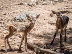 Día Mundial de la Lucha Frente a la Desertificación y la Sequía 2021, pérdida de biodiversidad y riesgo de enfermedades zoonósicas